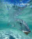 1216/Fly-Fishing-For-Bonefish-New-and-Revised