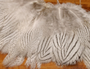 1470/Silver-Pheasant-Feathers