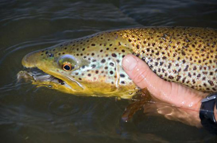 Montana travel lodges chicago fly fishing outfitters for Chicago fly fishing outfitters