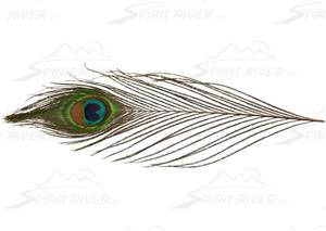 Spirit River UV2 Peacock Eyes
